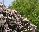pretty_garden_small